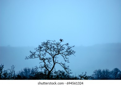 Silhouette picture of a bird on a tree