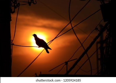 Silhouette of pigeon with a beautiful evening sky. Urban landscape is evident with electricity cables in the photo. Creating a dramatic scene to capture the eye. Good for advertising and decoration.