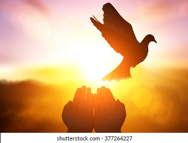 silhouette pigeon flying out of two hand and freedom concept and international day of peace 2016