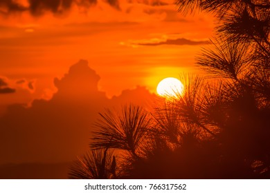 Silhouette Pine branches against the sunset background at PhuKradueng National park, Loei province, Thailand