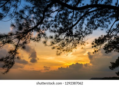 Silhouette of pine tree with sunset at the top of the mountain. Warm Colour