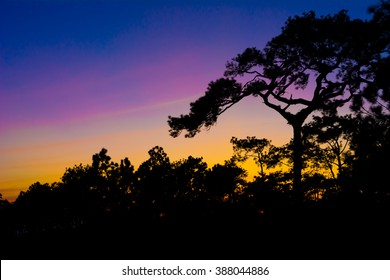Silhouette pine trees with clear dark blue, purple and orange sky at Phu Ka Dueng national park in Loey, a province of Thailand