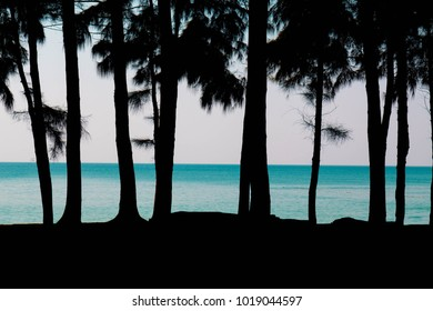 Silhouette pine trees on the background of a beautiful sea and blue sky in phuket Thailand