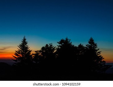Silhouette of Pines at Sunset With Clear Sky and traces of orange