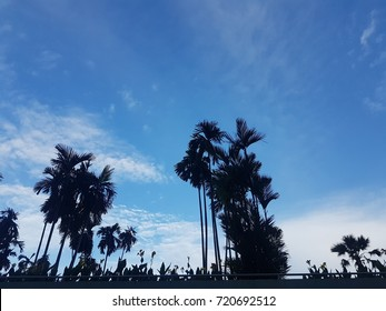 silhouette plam tree on blue sky