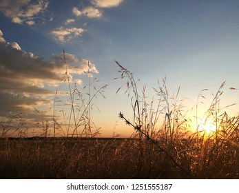 Silhouette of plants in contrast to sunset in the background.  Natural contrast at sundown in the countryside. Agricultural landscape. Horizon and loneliness. Panoramic in rural setting.