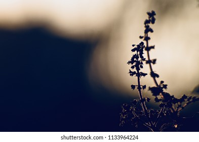 Silhouette plants with dark background isolated unique natural photo