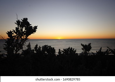 Silhouette of plants as sun dips at sunset