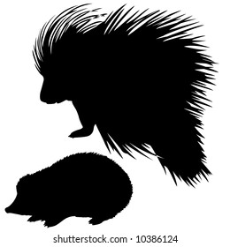 silhouette of the porcupine and hedgehog
