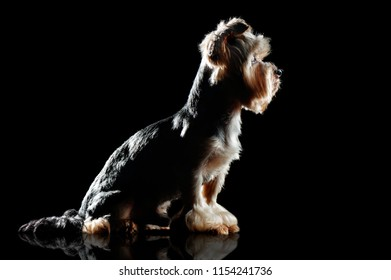 Silhouette profile of a sitting dog
