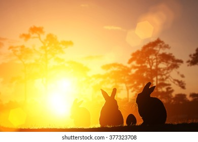 silhouette rabbit and egg on sunset for easter day