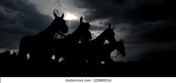 silhouette of race horses at Cheltenham races