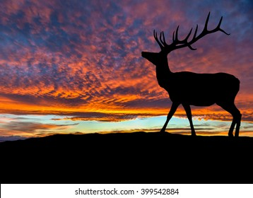 Silhouette of red deer bull elk on top of a mountain with sunset in the background. Also known as wapiti, it is one of the world's largest species within the Cervidae deer family. Copy space.
