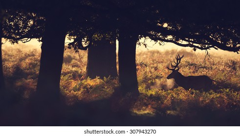 Silhouette of a red deer stag under a tree