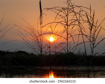 Silhouette of reeds growing around the fishpond against the backdrop of the sunset and the twilight sky