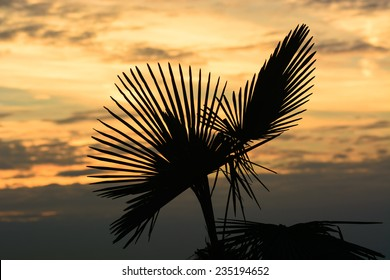Silhouette of Sabal palmetto leaves against sunset sky