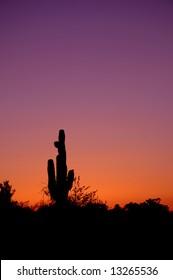 Silhouette of saguaro in Arizona's desert