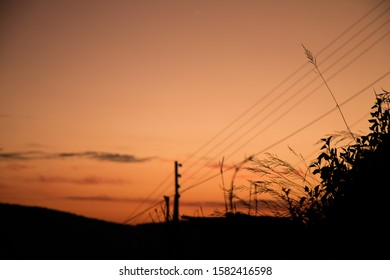 Silhouette scene of tree and electric pole on evening.