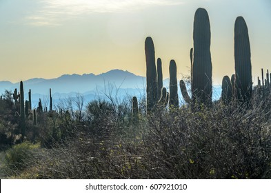 Silhouette scenery of the arid Sonora desert, Arizona, at sunset. Golden light shines on valley and Saguaro cacti in the foreground. Layers of mountains and twilight orange sky in the background.