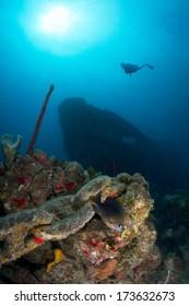 Silhouette of Scuba Diver above shipwreck Atlantic Princes in Caribbean, Dominican Republic.