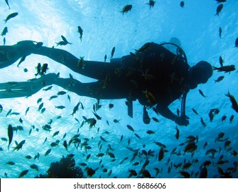 A silhouette of a scuba diver with lots of fish around him