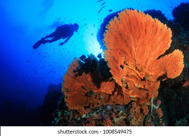 Silhouette of SCUBA divers swimming over a large sea fan
