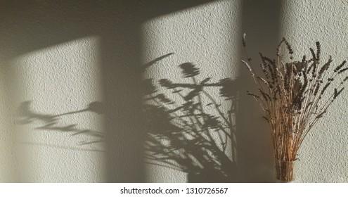 silhouette shadow flower