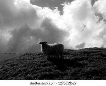 Silhouette of a sheep standing on the hill against cloudy sky