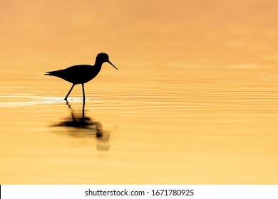silhouette of a shorebird at sunset
