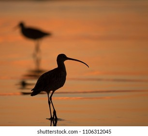 Silhouette of Shorebird at sunset on California Beach