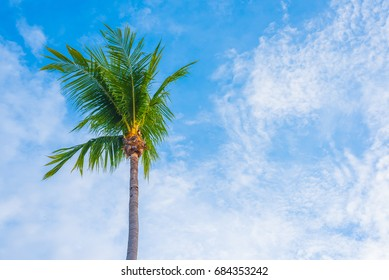 silhouette shot of coconut tree and sky in background .