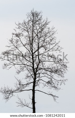 Silhouette of a single bare alder tree against a bright background