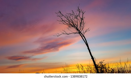 silhouette of a single sapling against a colourful sunset