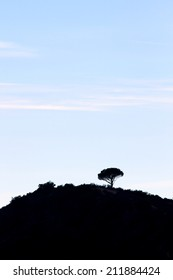 Silhouette of a single tree on a hilltop under a blue sky.