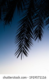 silhouette of some palm leaves in the upper part of the image leaving the lower part empty with cold light at sunset