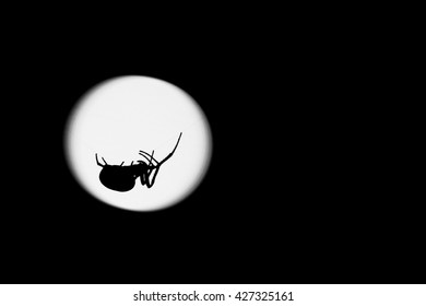 The silhouette of a spider is seen at night backlit by a streetlamp.