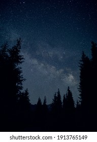 Silhouette of spruce at night sky with Milky Way and shooting stars