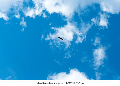 Silhouette Steppe eagle flying under the bright sun and cloudy sky in spring. Flying eagle in the sky