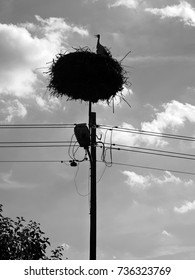 Silhouette of stork in its nest on the top of electrical pole. Typical view in Poland during spring and summer.