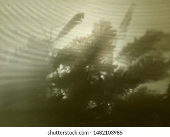 The silhouette of a strange leaf. The shadow of the leaves on the translucent roof sheet. The silhouette of the leaves of rain tree from the translucent fiberglass ceiling.