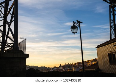 Silhouette of street lamp and the bird in Porto - Portugal.