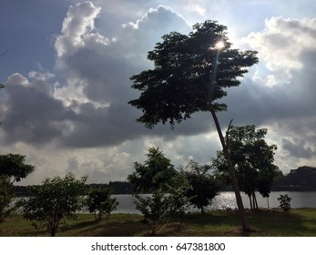 The silhouette style on the view of lake in the village. and landscape of the good shape of tree.