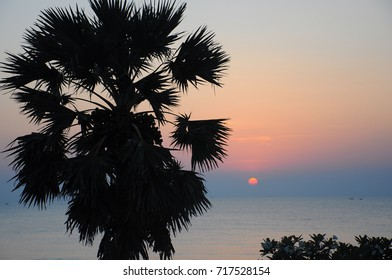 Silhouette of Sugar Palm and the sea under twilight time