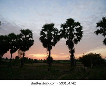 Silhouette of Sugar Palm in Twilight sky