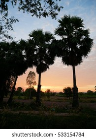 Silhouette of Sugar Palm in Twilight sky