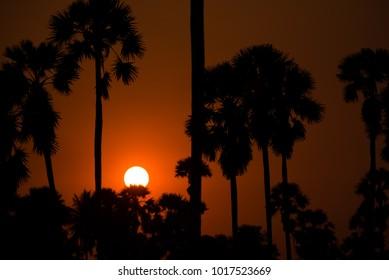 Silhouette of Sundown with tree palms.