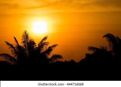 Silhouette sunset , Low key exposure , warm tone