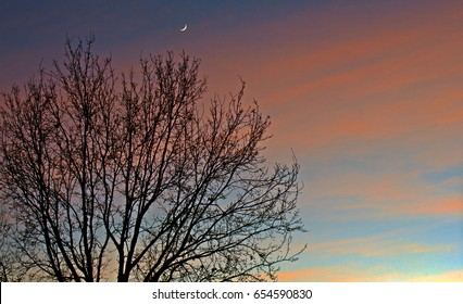 Silhouette Sunset with oak tree and little Moon at the top, and colered cloudy sky at background.