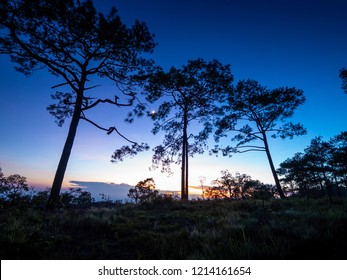 Silhouette Sunset Pine tree in twilight time at Phu kradueng national park ,Loei , Thailand.