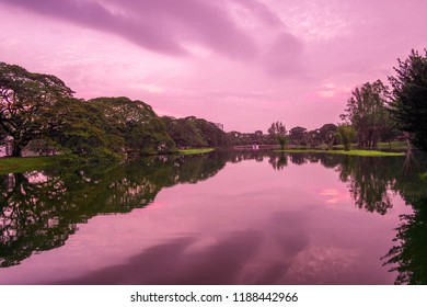 silhouette at Taiping Lake in Perak, Malaysia. One of Perak and Malaysia main attraction. The first lake garden in Malaysia. Reflection in water.